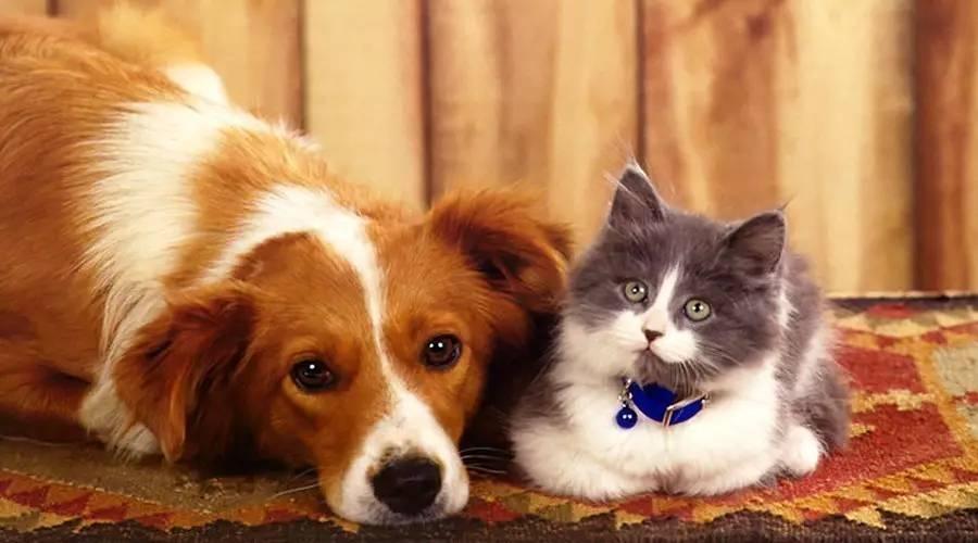 饲料级胆汁酸在犬猫日粮中的应用特点