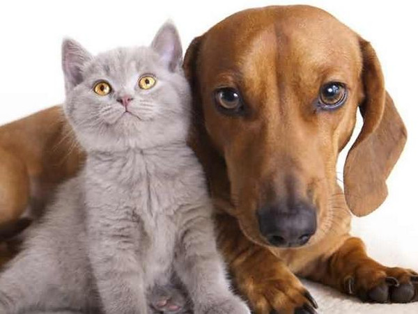 维护犬猫肠道健康的措施