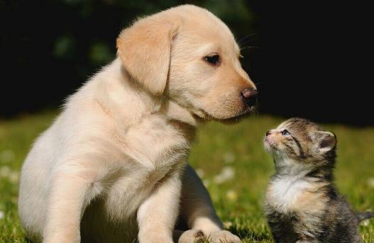 犬猫肠道健康的重要性