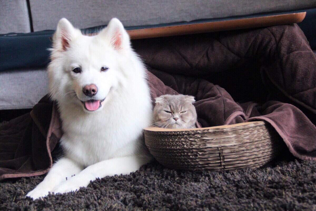 如何控制犬猫体重预防犬猫肥胖?