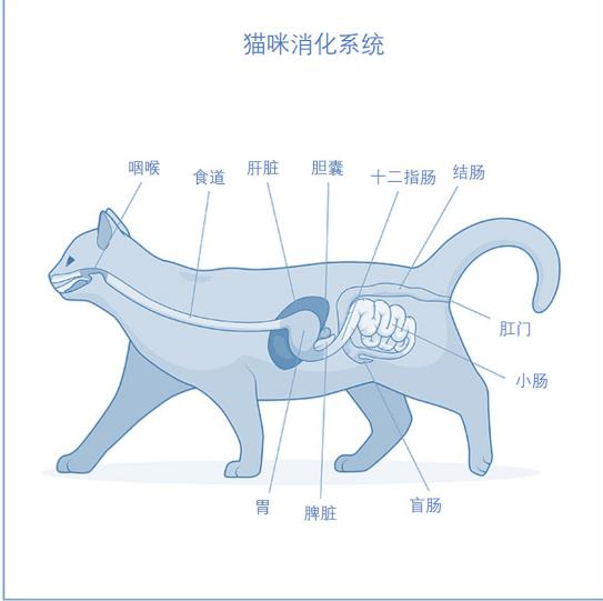 犬猫中的胆汁酸